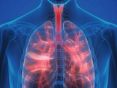 fisiologia-do-sistema-respiratório