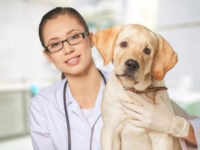 manipulação veterinária
